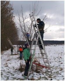 ausbildung-obstbaumpflege