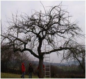 obstbaumschnitt-kurse