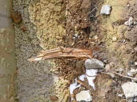 Fehlender Baumschutz - Wurzelkappung beim Ausheben einer Baugrube