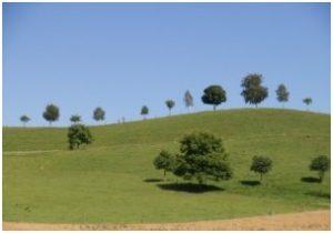 verarmung-der-landschaft